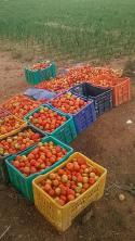 2015, lost a lot of crop, ut still yielded.