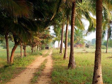 The drive up to Aranya