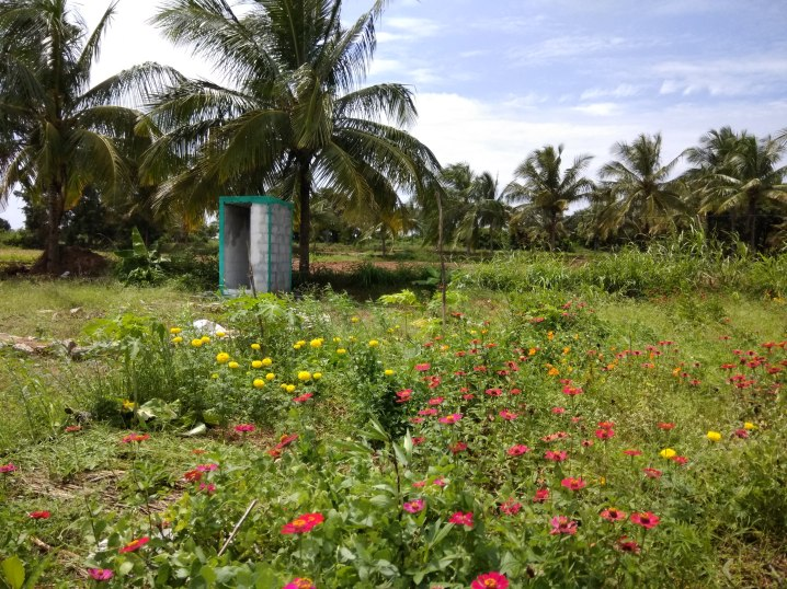 Toilet block and local flowers